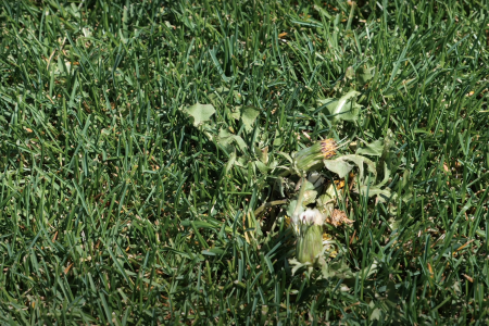 What kills weeds permanently