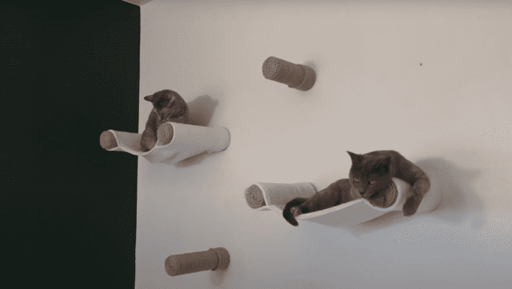 DIY cat shelves best ideas for your cat and design interior